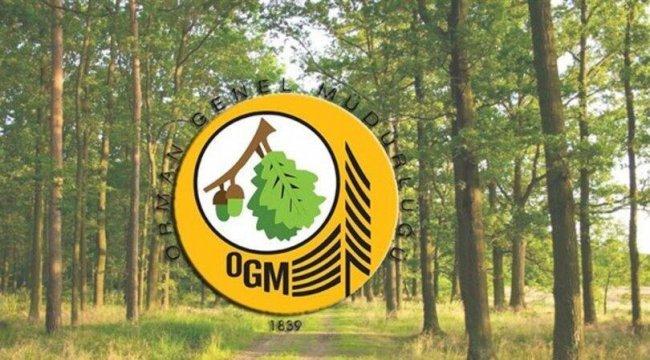 Orman Genel Müdürlüğü personel alımı şartları: OGM personel alımı başvurusu nasıl yapılır?